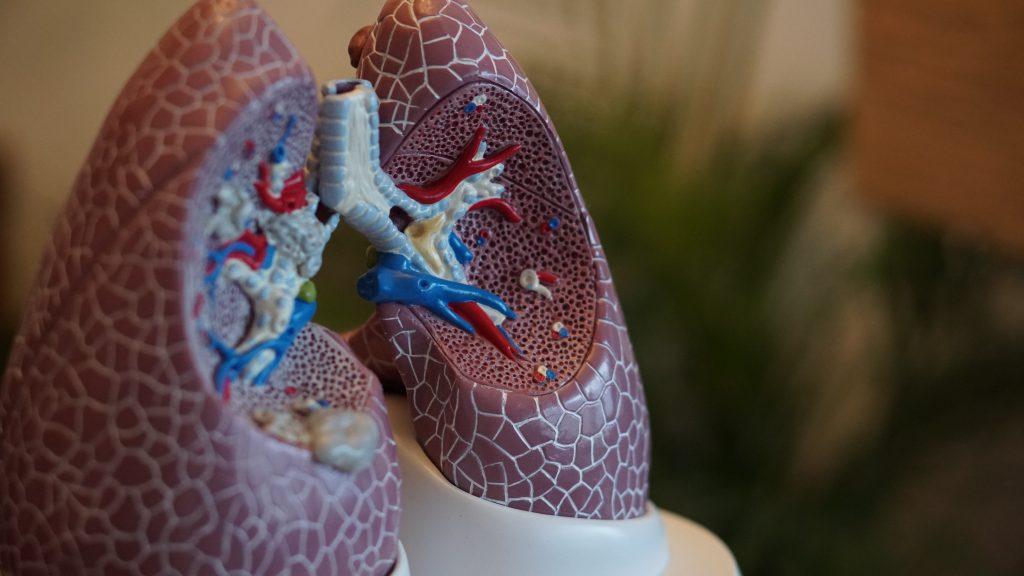 Structura plămânilor - Credits Robina Weermeijer_Unsplash