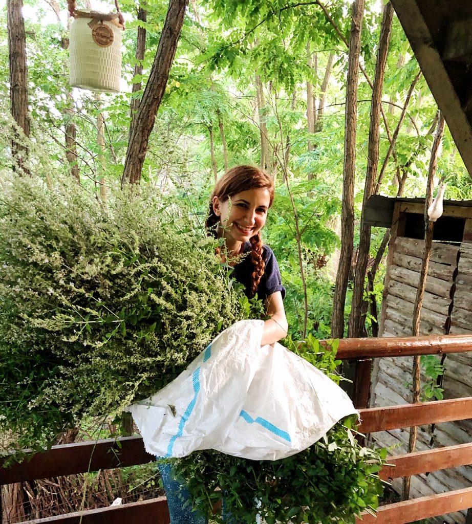 Dr. Farm. Ioana-Adina Oancea la cules de lavandă salbatică